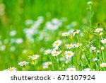 daisies shot close up that the... | Shutterstock . vector #671107924