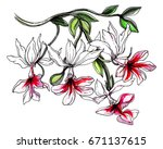 white orchid flowers on branch... | Shutterstock . vector #671137615