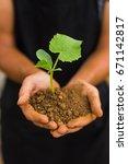 dirty farmer hands holding thai ...   Shutterstock . vector #671142817