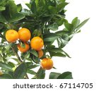 Mandarins On The Tree On White...