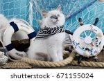 Stock photo kitten sits next to the sea decor breed regdoll 671155024