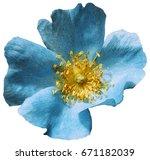 flower turquoise  on a white... | Shutterstock . vector #671182039