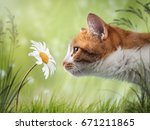 Cat Sniffing The Flower Is A...