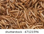 texture from exoskeleton of mealworms - stock photo