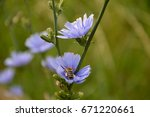 blue flowers | Shutterstock . vector #671220661