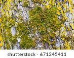 Close Up Picture Of Moss On A...