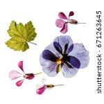 dry flowers   Shutterstock . vector #671263645