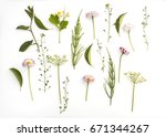 floral background with... | Shutterstock . vector #671344267