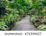garden path way with under tree ...   Shutterstock . vector #671344627