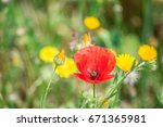 nature background with poppy... | Shutterstock . vector #671365981