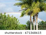three palm trees standing.... | Shutterstock . vector #671368615