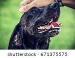 Stock photo  petting roscoe petting the head of my seguggio italiano mix dog 671375575