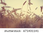 wheat field in summertime | Shutterstock . vector #671431141