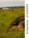 anteater and off road vehicle | Shutterstock . vector #671433025