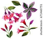wildflower weigela florida... | Shutterstock . vector #671460751