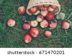 Apple Harvest Background ...