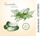 cucumber hand drawn vector...   Shutterstock .eps vector #671470801