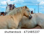 two lovers of horses | Shutterstock . vector #671485237