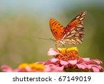 Colorful Agraulis Vanillae...