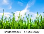 green grass and blue beautiful... | Shutterstock . vector #671518039