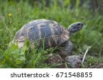 the spur thighed tortoise  or... | Shutterstock . vector #671548855