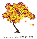 autumn maple tree with red and...