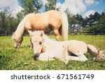 Mare With Foal Of The Miniatur...