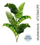 beautiful hand drawn botanical...   Shutterstock .eps vector #671566195