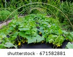 protection against weeds when... | Shutterstock . vector #671582881