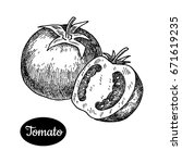 fresh tomato. hand drawn sketch ... | Shutterstock .eps vector #671619235