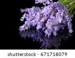 bunch of wild mountain lavender ... | Shutterstock . vector #671718079