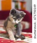cute kitten sleeping on a red... | Shutterstock . vector #671750149