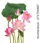 beautiful pink lotus flower... | Shutterstock . vector #671754487