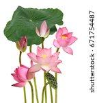 beautiful pink lotus flower...   Shutterstock . vector #671754487