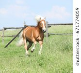 Small photo of Amazing haflinger running on pasturage in summer