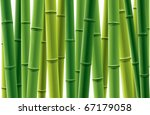 Fresh Bamboo Grove Vector...