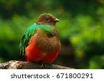 golden headed quetzal ... | Shutterstock . vector #671800291