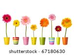 Collection Of  Daisy Flower On...