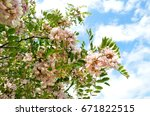 Branches Of Blooming Bush Of...
