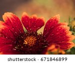 colorful flower with water... | Shutterstock . vector #671846899