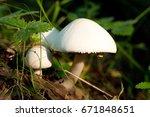 mushroom in green grass | Shutterstock . vector #671848651