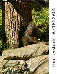 canadian porcupine | Shutterstock . vector #671852605