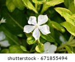 water drops white flowers and... | Shutterstock . vector #671855494