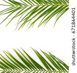 tropical palm leaves on a white ... | Shutterstock . vector #671864401