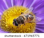 Macro Image Of A Bee That...