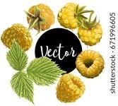 vector yellow raspberries... | Shutterstock .eps vector #671996605