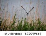 little bittern   | Shutterstock . vector #672049669