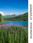 Fireweed In Front Of A Lake An...
