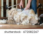 Small photo of Hands of man sheaving wool from sheep - shearing sheep for wool in barn