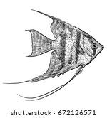 angelfish illustration  drawing ... | Shutterstock .eps vector #672126571